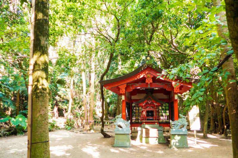 青島神社 神秘の森