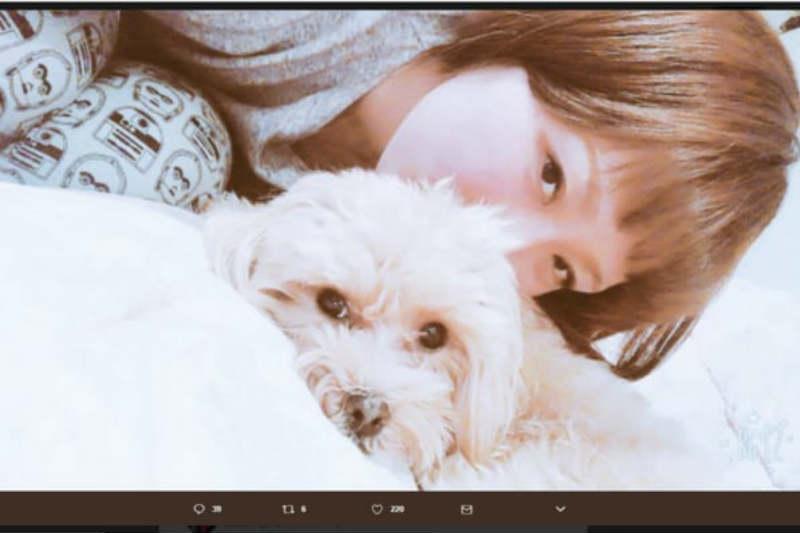 丸山桂里奈さんの愛犬はシーズー犬?